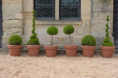 修剪的花园形状 库存图片