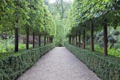 修剪的花园树,由一个走道的树篱在一个绿色庭院里 库存图片
