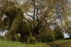 修剪的花园树 库存图片