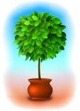 修剪的花园结构树向量 免版税库存图片