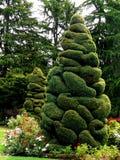 修剪的花园结构树 免版税图库摄影