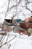 修剪结构树和灌木 图库摄影