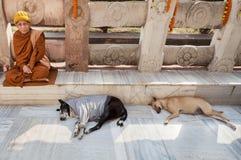 修士和两条睡觉狗在摩诃菩提寺 免版税库存照片