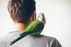 修士长尾小鹦鹉看与求知欲表示的照相机 库存图片