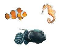 修士鱼、小丑鱼和海马。 免版税图库摄影