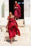 年轻修士,缅甸 库存图片