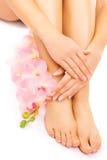 修指甲和修脚与一朵桃红色兰花开花 免版税库存照片