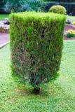 修整的灌木修剪的花园 免版税库存图片