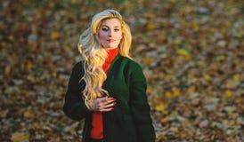修理怎么快速地和安全地漂白了头发 秋天重要的护发避免干燥卷曲的发型 女孩华美的金发碧眼的女人 库存图片