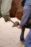 修理紧密照片的马蹄的过程 免版税库存照片