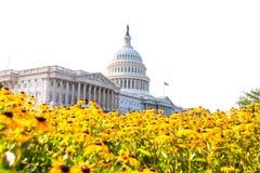 修造华盛顿特区雏菊的国会大厦开花美国 免版税库存照片