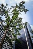 修造在香港商业区的现代摩天大楼底视图  免版税库存照片