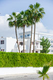修造的绿色棕榈植物 免版税图库摄影