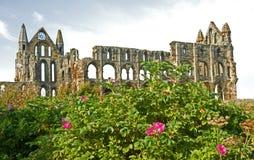 修道院别的whitby的视图 库存照片