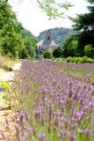 修道院归档的淡紫色senanque 免版税图库摄影