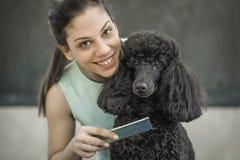 修饰在一个发廊的小犬座狗的 库存照片