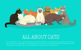 修饰的猫显示横幅或兽医似猫的飞行物传染媒介例证 逗人喜爱的小猫宠物海报 滑稽的动物演播室 库存例证