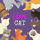 修饰的猫爱展示横幅或兽医似猫的飞行物传染媒介例证 逗人喜爱的小猫宠物海报 滑稽的动物 向量例证