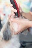 修饰头发由飞剪机的面孔狗 免版税库存照片