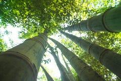 修建房子的竹子 免版税图库摄影