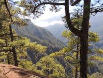 俯视一座树木繁茂的山 库存图片