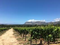 俯视山的葡萄园 免版税库存照片
