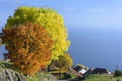 俯视日内瓦湖和阿尔卑斯的秋天树 库存图片