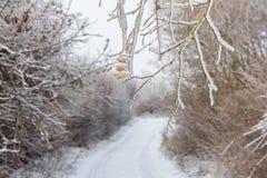 俯视森林道路的冻结的树枝在冬天 免版税库存照片