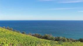 俯视海的秋天葡萄园在晴天 影视素材