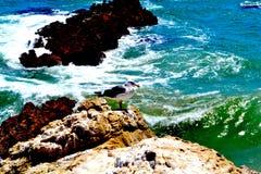 俯视海洋的海鸥 免版税库存照片