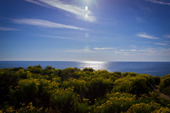 俯视海洋的花和草的领域在马利布,加州 免版税库存照片