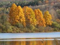 俯视湖的充满活力的秋天树 免版税库存图片