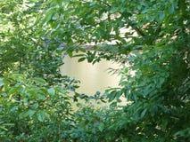 俯视湖的叶子 免版税库存照片