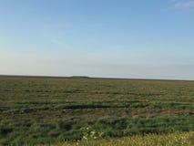 俯视的沼泽地 免版税库存照片
