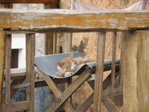 滑倒猫 免版税图库摄影