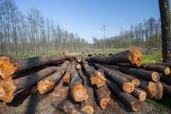 击倒的树干在森林沼地 免版税库存图片