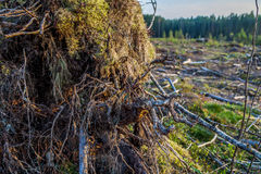 击倒的树日志看法  免版税库存照片