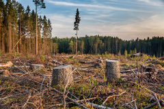 击倒的树日志看法  图库摄影