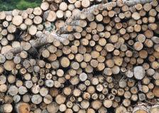 击倒的树的树干 免版税库存照片