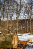 击倒的树 库存图片