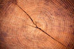 击倒的树 免版税库存图片