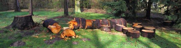 击倒的树 库存照片