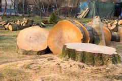 击倒的老树 库存图片