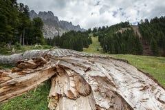 击倒的结构树 库存图片