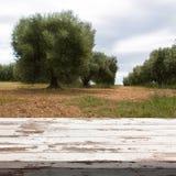 倒空与夏天风景的木甲板桌有橄榄树背景 为产品显示蒙太奇准备 库存照片