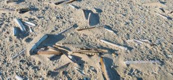 倒空在沙子的大西洋大折刀蛤蜊壳 免版税库存图片
