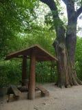倒空木旅游风雨棚在一棵大树下 库存照片
