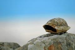 倒空陆龟hermanni小的乌龟壳在石头的与蓝色多云天空在背景中 免版税库存照片