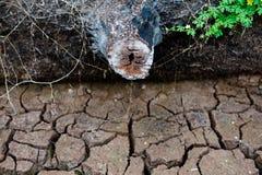 绊倒,死的树,干陆,世界灾害,破裂的地面背景 库存图片
