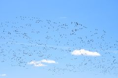 候鸟在春天回到在家他们的栖所 库存图片